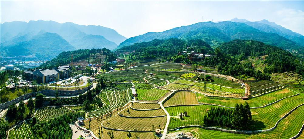 雨城区多营镇中国藏茶城