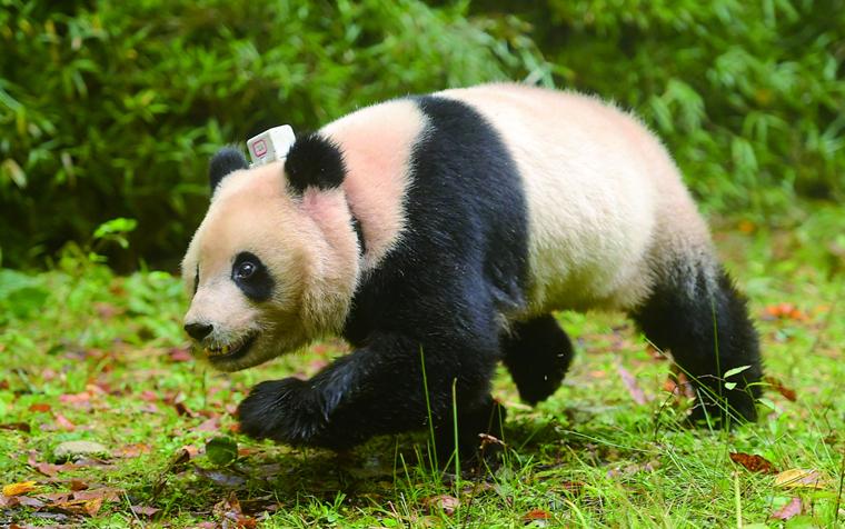 建设好大熊猫家园 传承好大熊猫文化